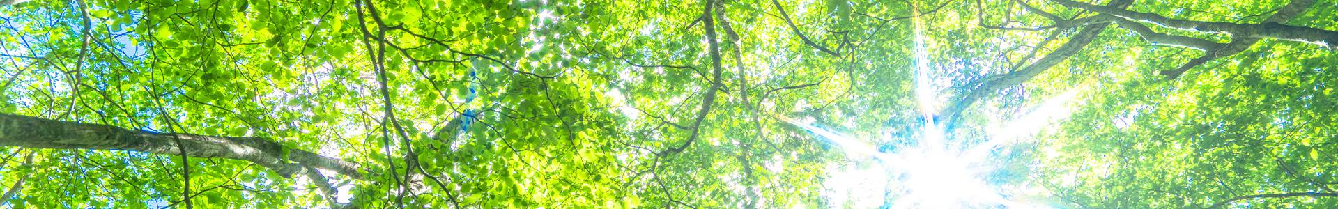 写真:自然イメージ